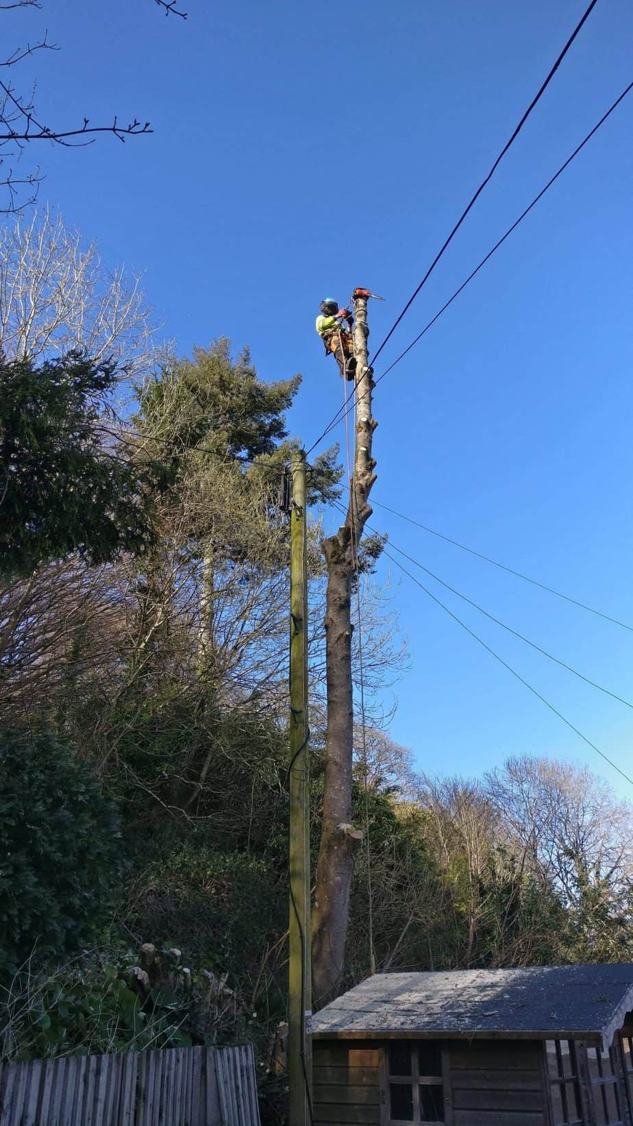 Tree Surgery Cornwall